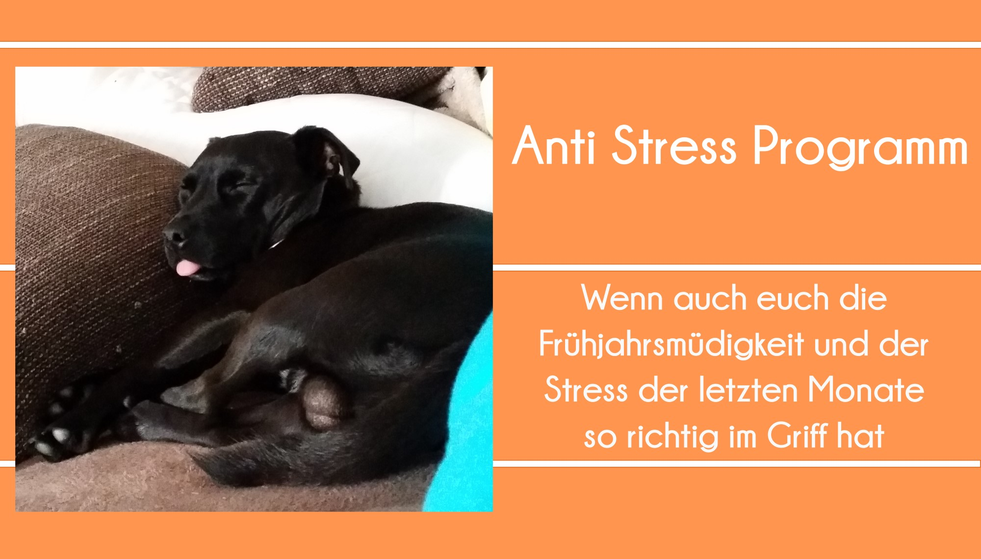 Tipp Anti Stress Mittel Smoothie Maske Cover